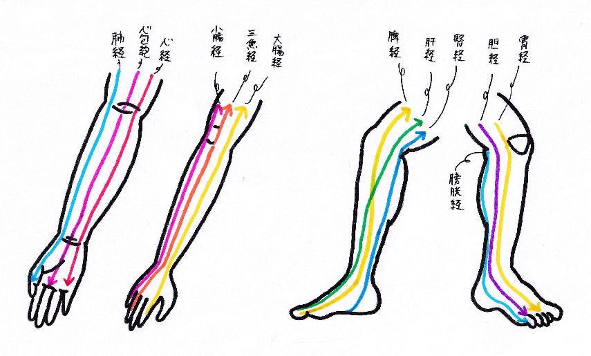 手と脚の経絡のおおまかな流れ